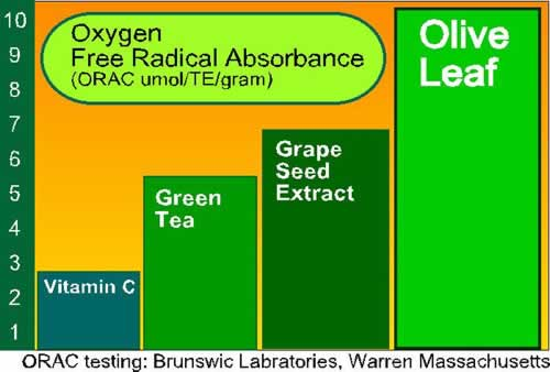 ORAC value of olive leaf